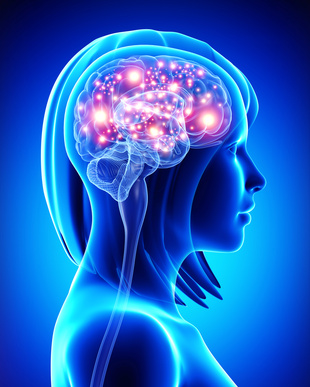 Studie: Durch das Lernen von Sprachen wächst unser Gehirn