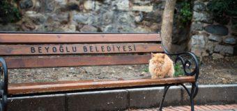 Die Sprachen unserer Nachbarn: Türkisch